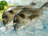 Seafood stall — Stock Photo