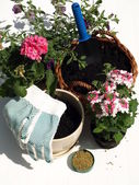 Gardening — Stock Photo