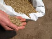 Hand sowing grass, closeup — Stock Photo