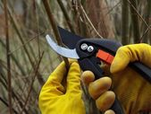Cutting branches — Stock Photo
