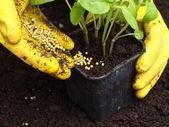Fertilization, closeup — Stock Photo