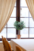 Green plant in window — Foto Stock