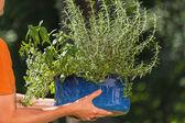 Summer gardening — Stock Photo