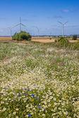 Yazları kırsal çayır — Stok fotoğraf