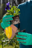 Planting flower — Stock Photo