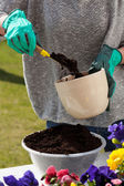Woman hands replanting flowers — Stock Photo