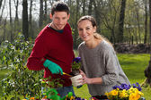 Gardener couple at work — Stock Photo