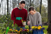 Couple enjoying garden work — Stock Photo