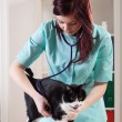 Veterinarian examining a cat — Stock Photo #46146047