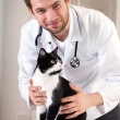 Vet with cat — Stock Photo