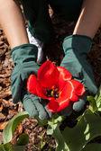 Blumen pflanzen im garten — Stockfoto