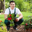 Asian gardener planting flowers — Stock Photo