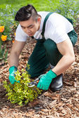 Asian gardener cropping a plant — Stock Photo