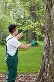 Gardener cropping tree — Stock Photo