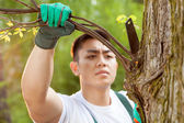 Asian gardener cropping branch — Stock Photo