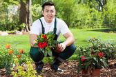 Asian gardener planting flowers — Stock Photo