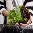 Washing lettuce — Stock Photo #48582079