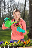 Pouring water on flowers — Stock Photo