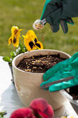 Planting seeds into flower pot — Stock Photo