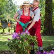 Couple working together in the garden — Stock Photo #48703479