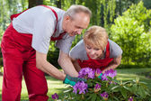 Married couple take care of the flowers  — Foto Stock