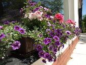 Flowers on windowsill — Stock Photo