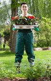 Gardener with flower seedlings — Stock Photo