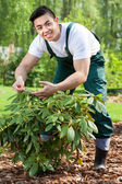 Gardener taking care of plant — Stock Photo