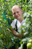 Gardener wearing gloves among tomatoes — Stock fotografie