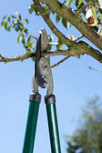 Close-up of pruning — Stock Photo