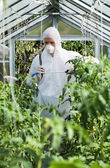 Gardener spraying plants in greenhouse — Stock Photo