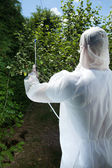 Spraying tree in a orchard — Stock Photo