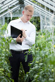Taking notes in a greenhouse — 图库照片