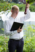 Garden expert controlling beet condition — Stock Photo