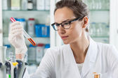 Scientist analyzing chemical liquid — Stock Photo