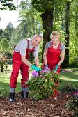 Marriage working in garden — Foto Stock
