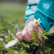 Childs hand with early spring flower — Stock Photo