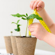Measuring growth — Stock Photo