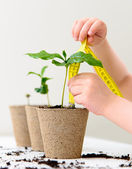 Measuring growth — 图库照片