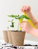Mäta tillväxt — Stockfoto