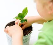 A child and a new plant — Foto Stock