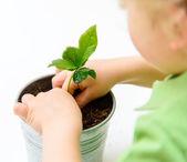 Uma criança e uma planta nova — Foto Stock