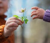 Wiosna kwiatów z brat siostra — Zdjęcie stockowe