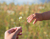 Flower to a child — Stock Photo