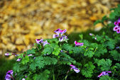 çiçekler — Stok fotoğraf