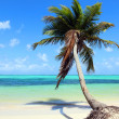 Tropical beach with coconut palm — Stock Photo #23763499