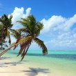 Tropical beach with coconut palms — Stock Photo #23964845