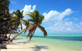 Tropical beach with coconut palms — Stock Photo