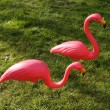 Pair of flamingos — Stock Photo #24142341