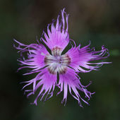 Flor de manutenção, frança. — Foto Stock